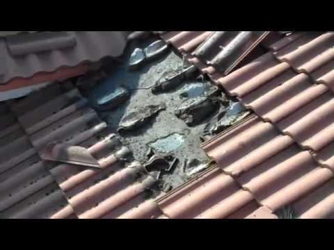 Murciélagos en el tejado