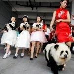¿Panda o perro?