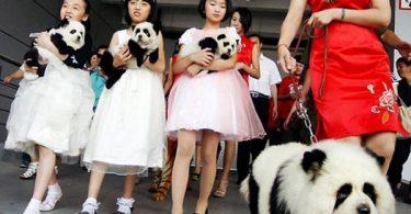 Panda o perro (10)