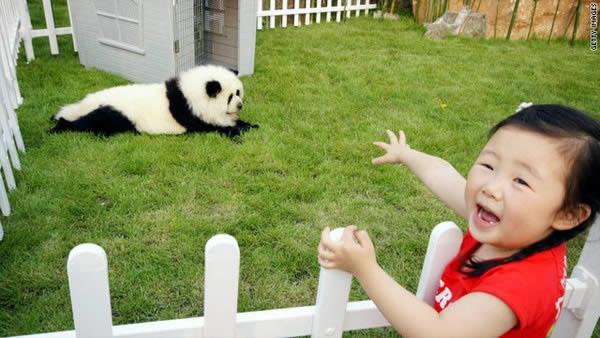 Panda o perro (9)