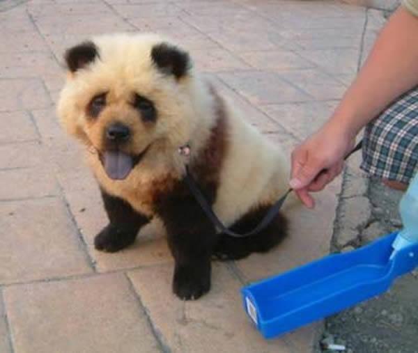 Panda o perro (8)