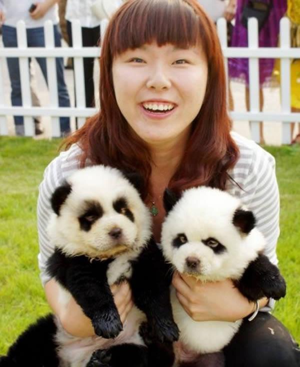 Panda o perro (6)