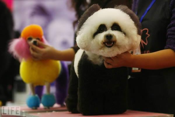 Panda o perro (5)