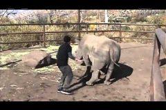 Montando un rinoceronte