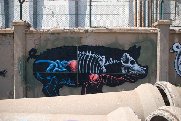 Graffiti Animales (11)