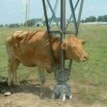 ¿Cómo llegó ahí el animal?