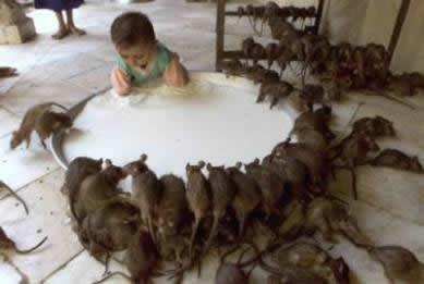 Mas Curiosidades historicas Ahuyentar-rata-blanca