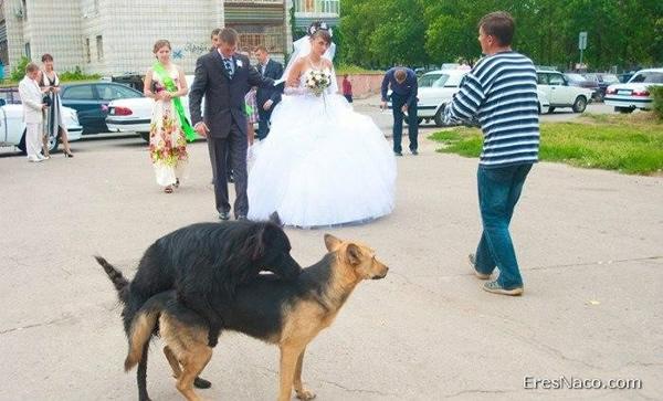 bodas nacas fail (7)