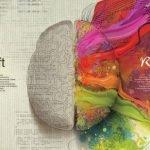 15 curiosidades sobre el cerebro