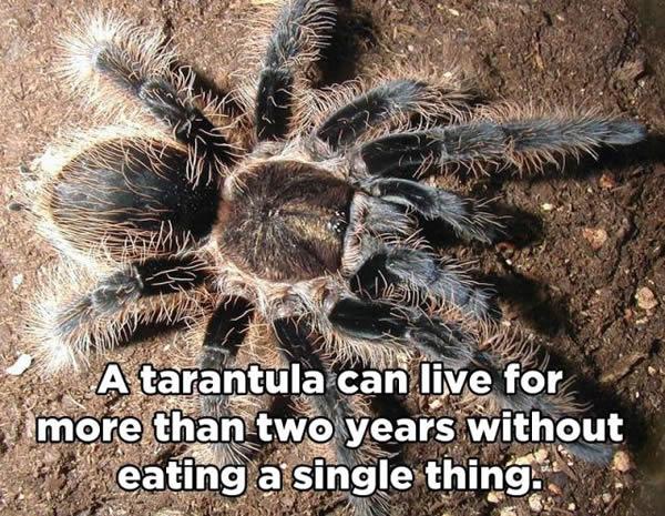 10 imágenes y curiosidades del mundo animal 10-curiosidades-animales_640_06