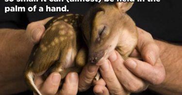 hechos curiosidades animales (1)