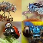 Los insectos de Ondrej Pakan