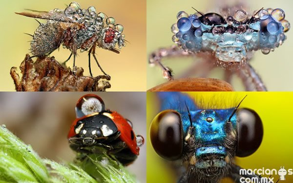 insecto (1)