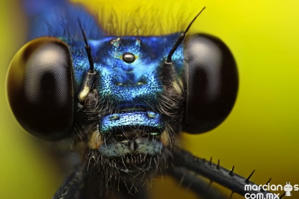 insecto (6)
