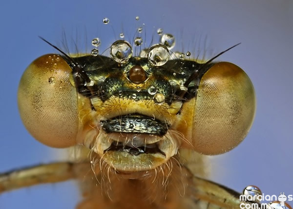 insecto (2)