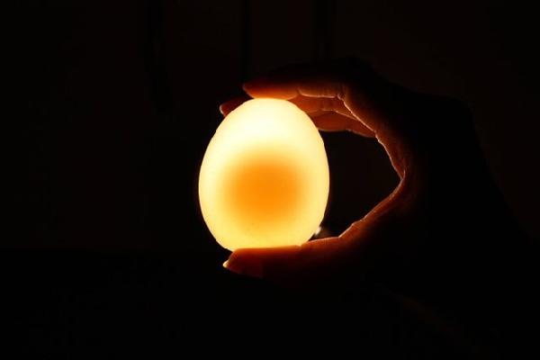 Huevo Experimento (12)