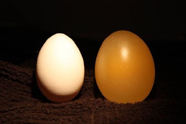 Huevo Experimento (8)