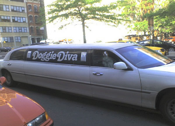 Solo pasa en Nueva York PERRA_DIVA