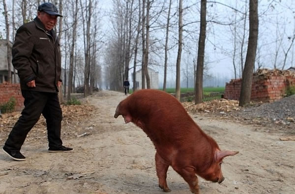 Solo en China (4)