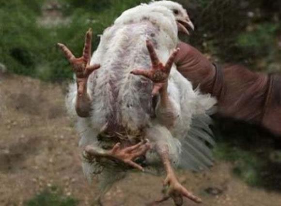 animales mutantes (41)