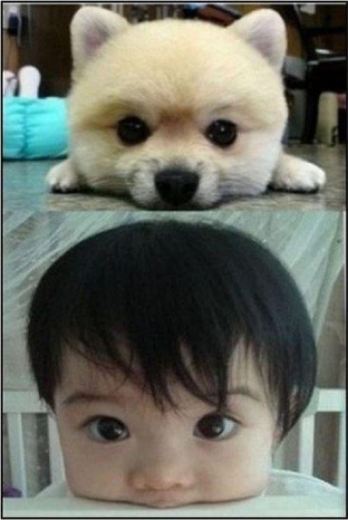 bebes asiaticos (4)