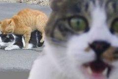 metiches fondo animales (1)