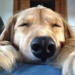 Datos y curiosidades de los perros