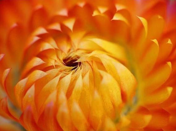 Fibonacci en la flores (6)