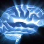 Cerebro electoral