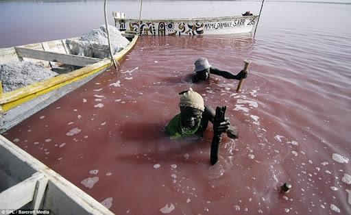Lago rosa (3)