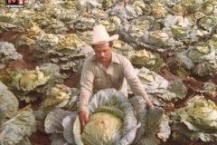 Verduras Gigantes en Valle de Santiago