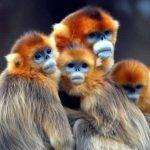 Top nuevas especies del 2012