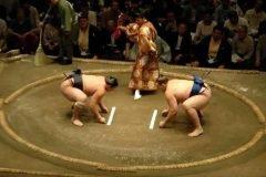 pela sumo japon (22)