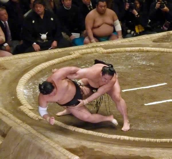pela sumo japon (1)