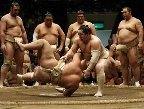 pela sumo japon (12)