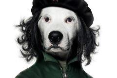 Celebridades como perros y gatos: Famous Faces