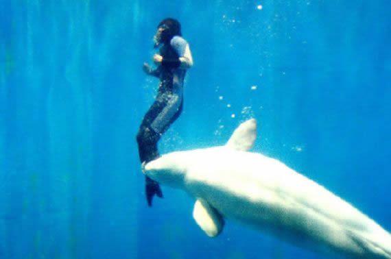 ballena beluga heroe