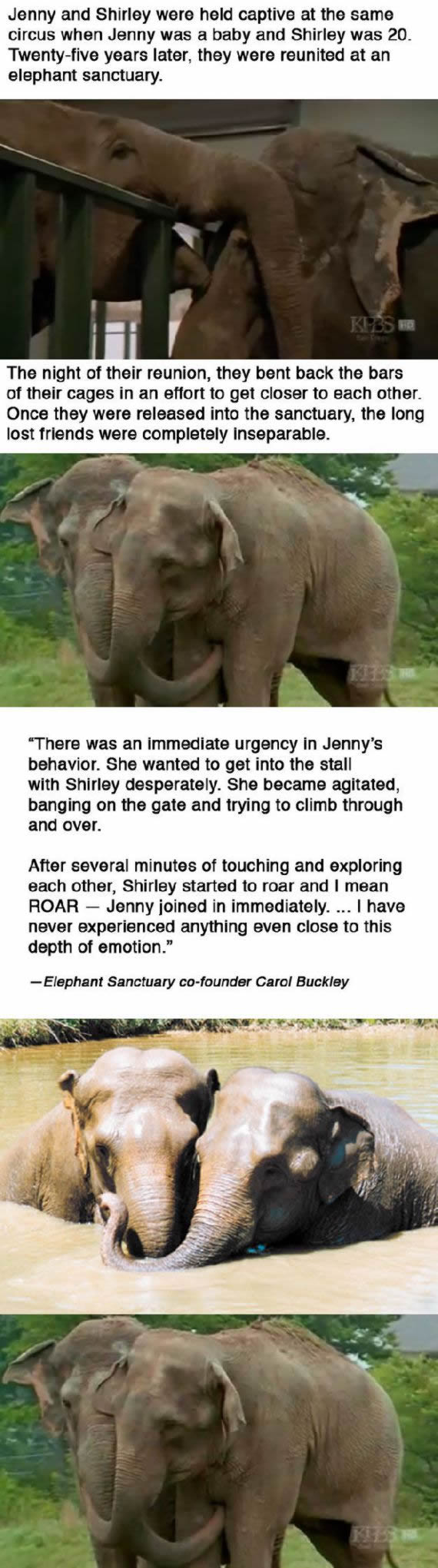 elefantes Jenny y Shirley