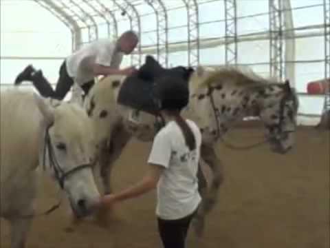patada caballo