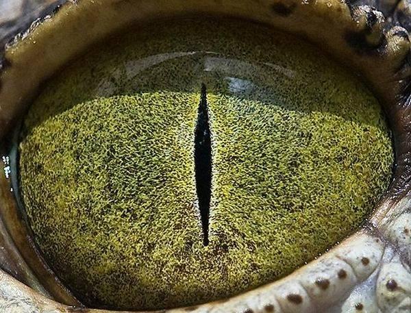 macrofotografía animales ojos (1)