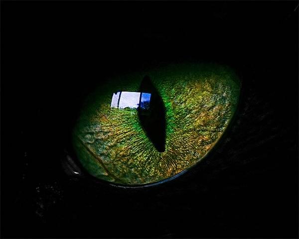 macrofotografía animales ojos (3)