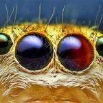 40 Macrofotografías de ojos animales