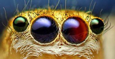 macrofotografía animales ojos (40)