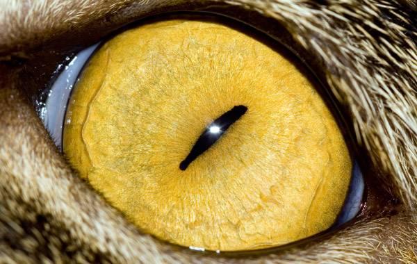 macrofotografía animales ojos (4)