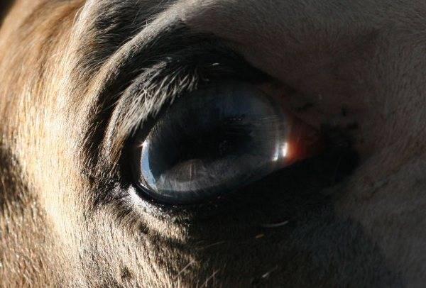 macrofotografía animales ojos (6)