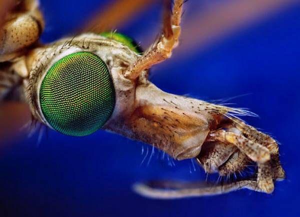 macrofotografía animales ojos (39)