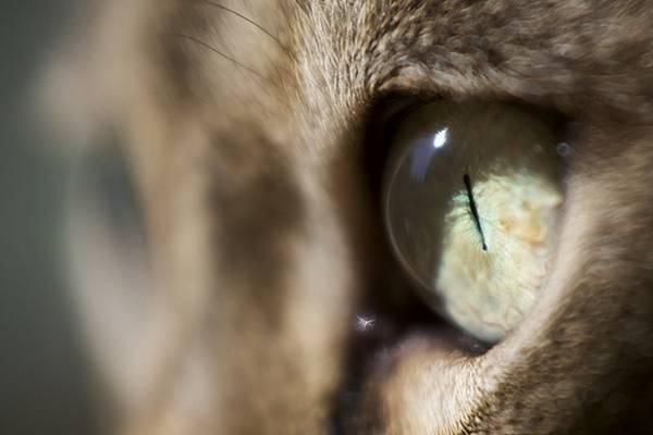 macrofotografía animales ojos (7)