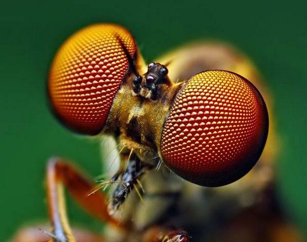 macrofotografía animales ojos (8)