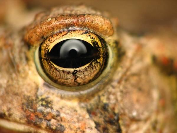 macrofotografía animales ojos (9)