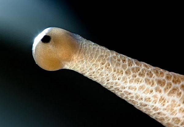 macrofotografía animales ojos (10)